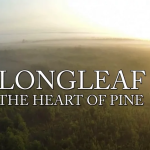 Longleaf: The Heart of Pine Teaser Trailer