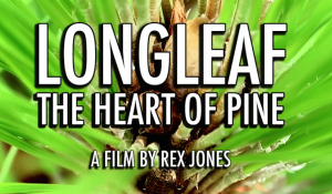 LONGLEAF: THE HEART OF PINE a film by Rex Jones